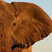 Desert Elephants Volunteer Programme, Namibia