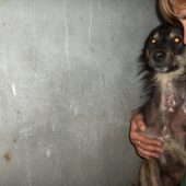 Spay, Neuter and Release dogs in Nepal