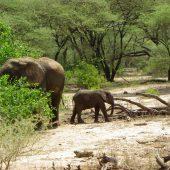 Mwaluganje Elephant Sanctuary, Kenya