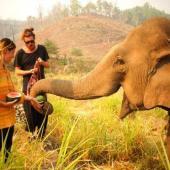 Elephant Volunteer Project, Thailand