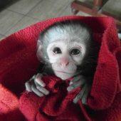 Vervet Monkey Foundation Volunteer Program