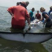 Join a Dolphin Research Internship on the Namibian Coast