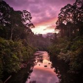 Volunteer Project Managers needed for expeditions in Malaysian Borneo
