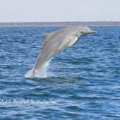 Moreton Bay Dolphin Research Project