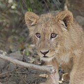 Eagle Heights Gambia – Animal Care and Wildlife Conservation