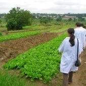 Agriculture volunteer project in Ghana