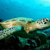 Turtle Conservation in Indonesia