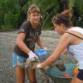 In Water turtle Monitoring