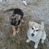 Help Stray & Abandoned Dogs in Bulgaria