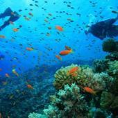 Caribbean Reef Buddy Diving Project, Carriacou
