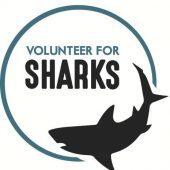 Volunteer For Sharks