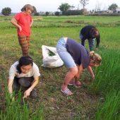 Agriculture volunteer program in Nepal