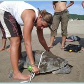 Ecuadorian Turtle Conservation and Research