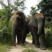 Volunteer in Thailand with Elephants, Bears and Wildlife