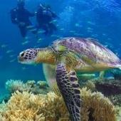 Great Barrier Reef Monitoring and Turtle Conservation