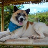 Thai Island Dog and Cat Shelter