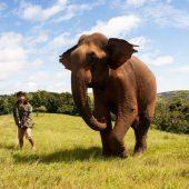 Volunteer at the Mondulkiri Elephant and Wildlife Sanctuary