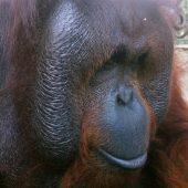 Wildlife Rescue Volunteer Programme in Indonesia