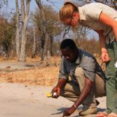 Internship in Botswana – Wildlife and Community Research in Southern Africa