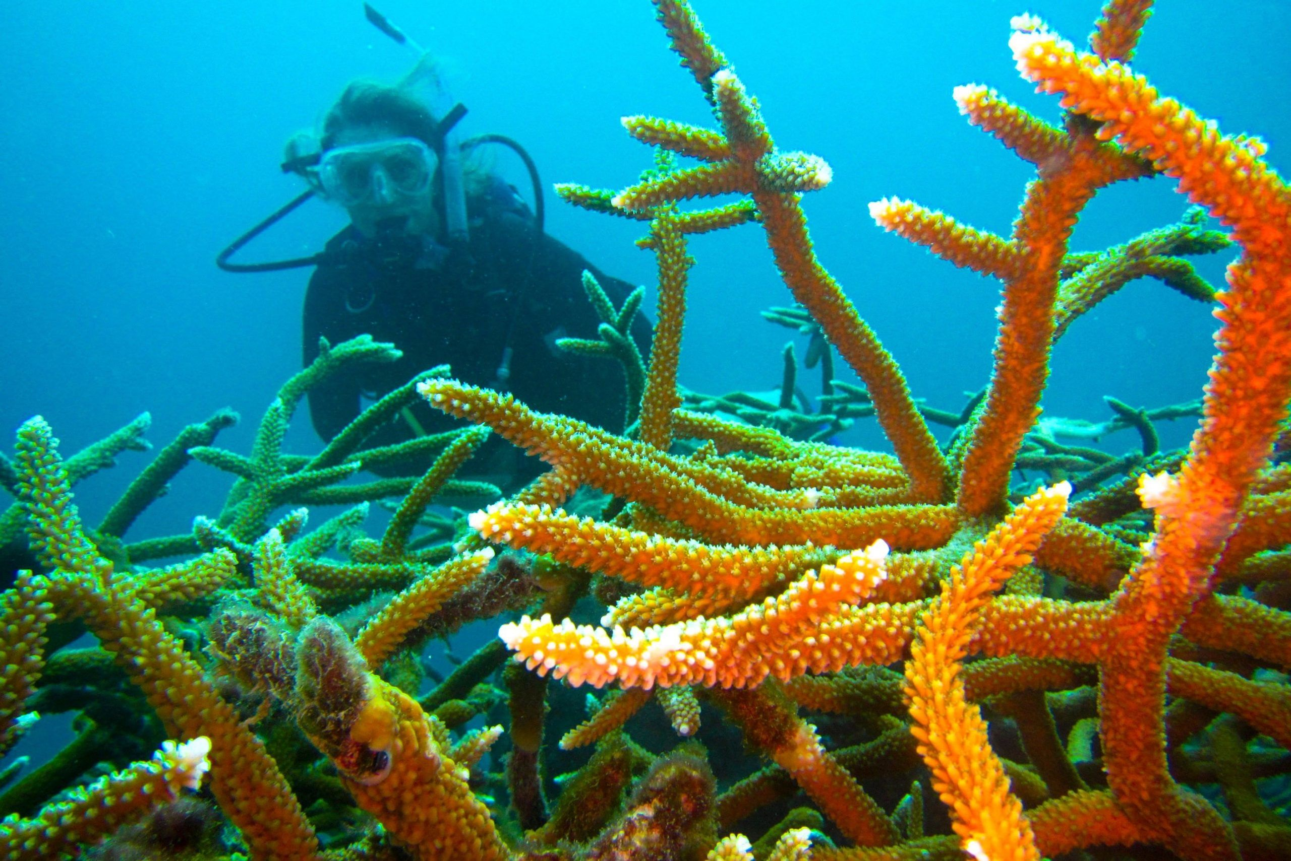 Coral Reef Conservation Volunteer Project, Cuba