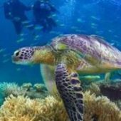 Volunteer in Australia with Great Barrier Turtle Conservation Program