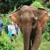 Elephant Sanctuary Volunteer Project, Cambodia