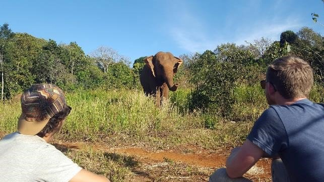 Volunteers observing elephants at Sanctuary