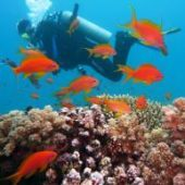 Volunteer in Bali with Love Volunteers Reef Conservation Program