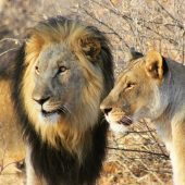 LEO Africa - Wildlife Monitoring & Conservation Project