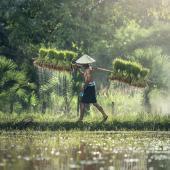 Volunteering on an Eco Farm in Myanmar