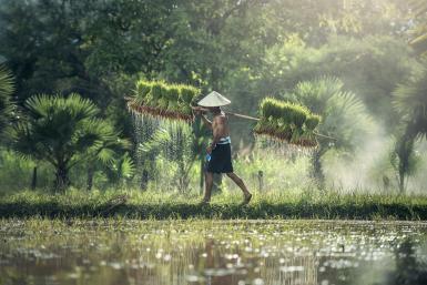 alttagVolunteering on an Eco Farm in Myanmar