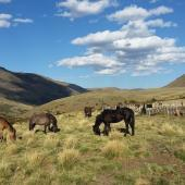Internship on a Horse Ranch in Argentina – Farmwork in South America