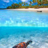Sea Turtle Conservation & Creative Recycling in Zanzibar