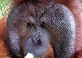 Wildlife Rescue Volunteer Project, Indonesia