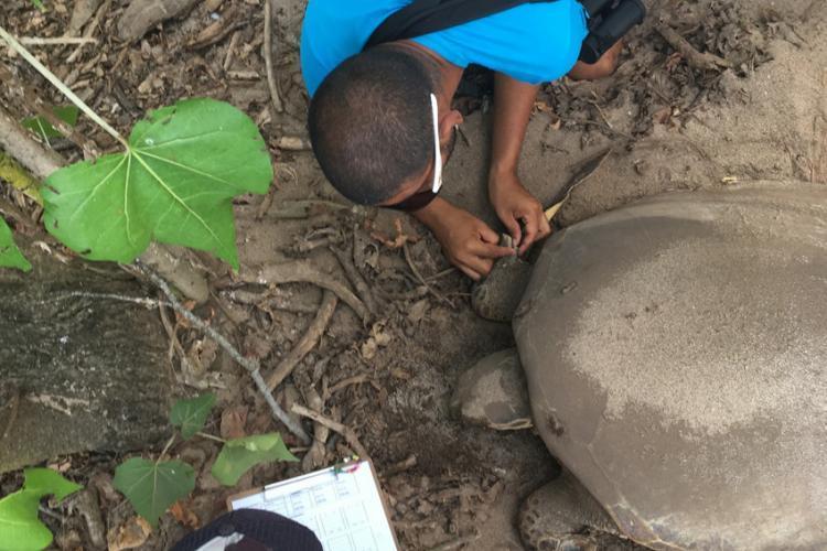 Checking turtle tag