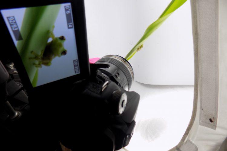 Close photography