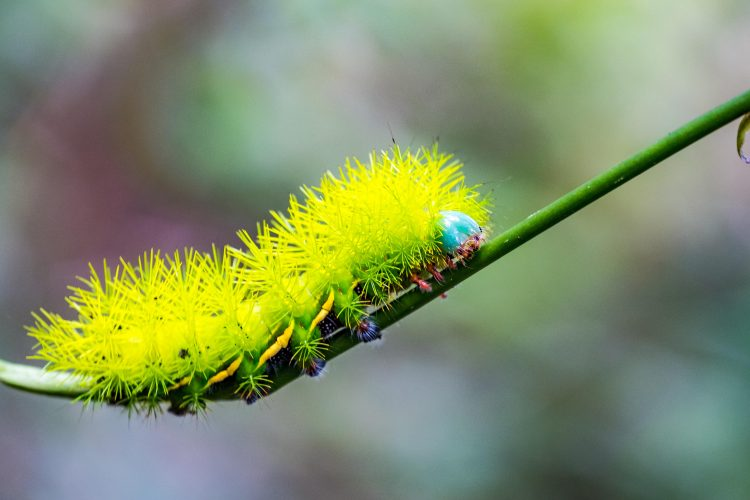 Colourful critters of amazon