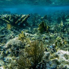 Coral reef of Cuba