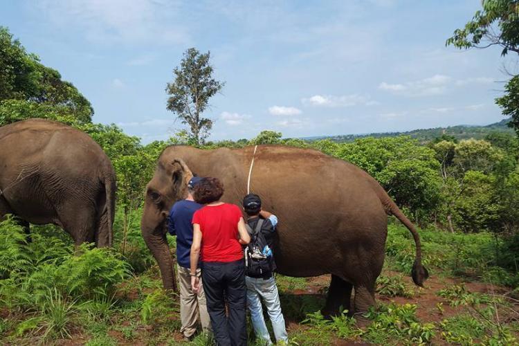 Elephant health check
