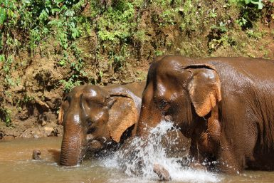 Elephants enjoying the water