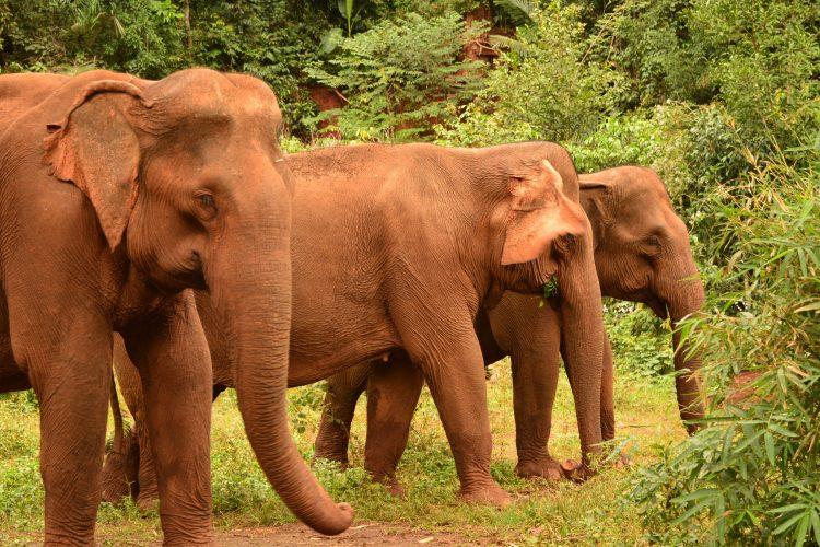 Elephants roaming in forest
