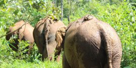 Elephants walking in forest