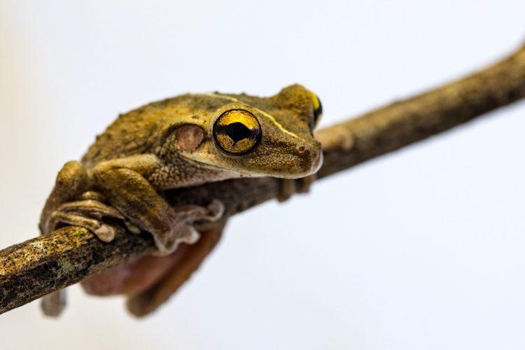 Frog in white box