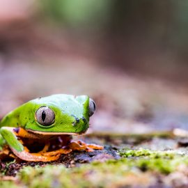 Frog on forest floor