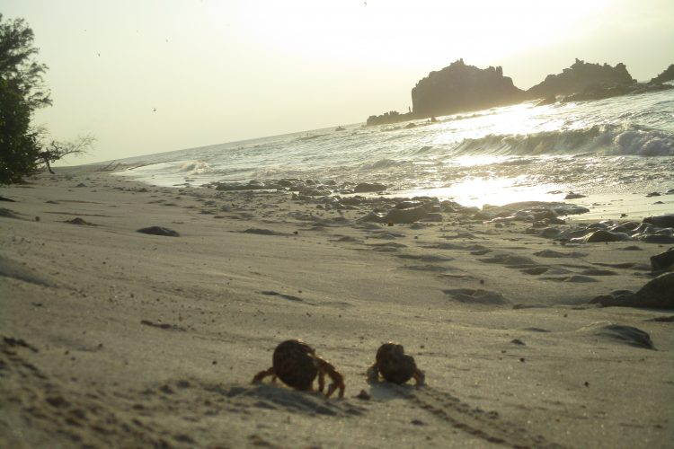 Hermit crabs on beach