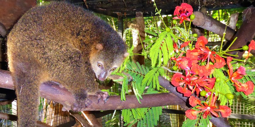 Katie the Cuscus like flowers