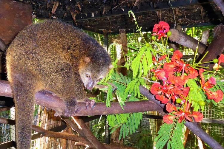 Katie the Cuscus like flowers