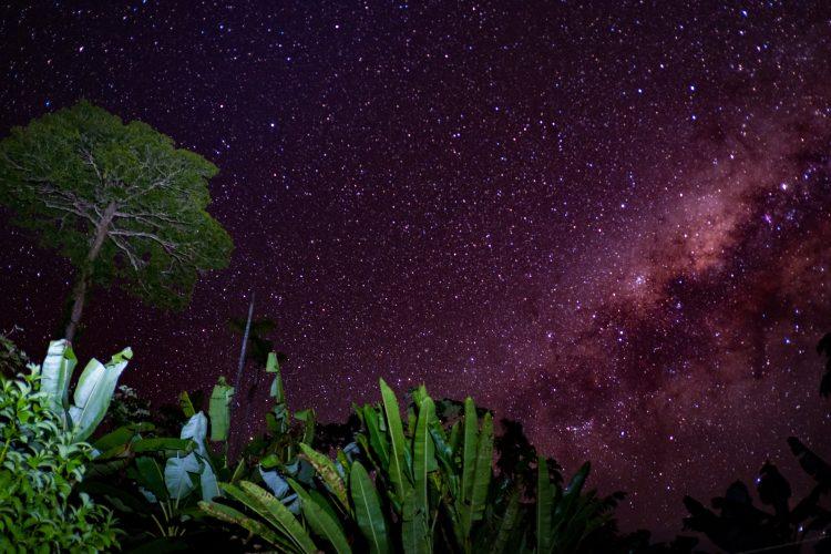 Star sky amazon rainforest