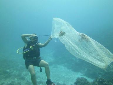 Volunteer catching Lionfish