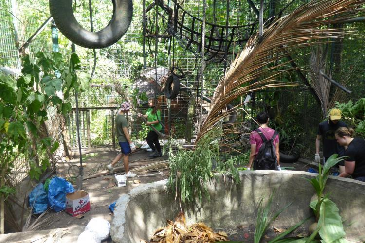 Volunteers enriching the orangutan enclosure